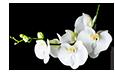 kwiaciarnia wiązanki wieniec